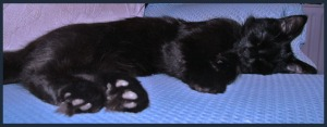A black kitten sleeping